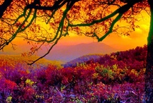 The Colors of Fall / by Donna Shubrook Heacock
