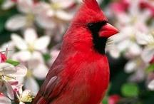 Birds / by Donna Shubrook Heacock