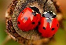 Lady Bugs and Other Creatures