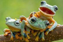 Frogs in memory of my sister Teri