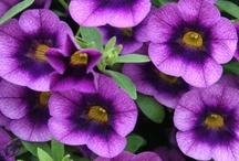 Deep purple / by Sandy F.