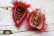 ♧Creation's - Seeds, Pods & Nuts / Color, Shape, Texture, & Pattern / by Dana Lynn