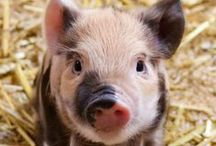 Pigs / Animals are my friend, I don't eat or wear my friends !