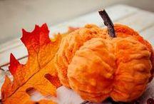 Pumpkin Palooza / I love all things pumpkins... / by Grace Edwards