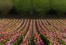 Flowers / Fleurs / Venez découvrir ce tableau consacré aux plus jolies fleurs du web.   Come and discover this board dedicated to beautiful flowers.