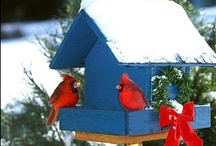 Gardening - Birds and Butterflies / My type of pets - they just don't ever come inside or go in cages.