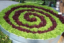 Gardening - Edible Landscaping / Ninja veggies - secretly hiding in your other gardens! / by Amanda HockeyLove