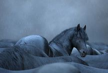 Horses / by Ingrid de Zwart