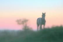 Horses - Story of my Life