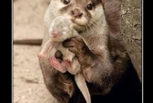 Precious, Sweet and Amazing Animal Pics / by Millie Buffa