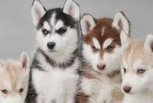 Dogs n Puppies ❦ / by ☠ кαяєи ¢σияα∂ ⋆ кιἥg ☠