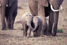 elephants / by horsesandanna