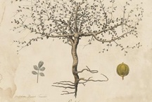 botanic / #botanic #illustration #garden #science #art #plate