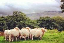 Pays de Galles - Wales / Connaissez-vous le Pays de Galles ? Venez découvrir dans ce tableau ses paysages et sa cuisine.   Do you know Wales ? Come and discover its landscapes and welsh recipes.