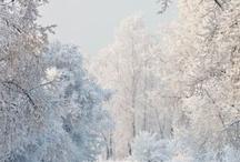 Winter Wear / by Ginny Deroche