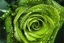 G is for Green / V comme vert / Do you like the green color ? Come and see this board only dedicated to this beautiful color. Aimez-vous la couleur verte ? Venez voir ce tableau uniquement dédié à cette belle couleur