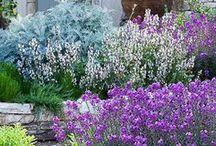 Secret garden / Jardin secret / Si vous aimez les très beaux jardins, venez découvrir ce tableau.   If you love beautiful gardens, come and discover this board.