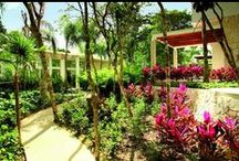 Bahia Principe Gardens / Enjoy the surprising scenery and natural lush gardens at hotel