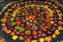 Arboretum days / by Charis Keller