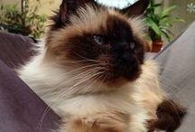 Cats / Kitties / Chats / Vous aimez les chats ? Vous les trouvez trop mignons ? Venez découvrir ce tableau.  Do you like cats ? You find them so cute ? Come and discover this board.