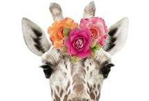 Giraffes ♥