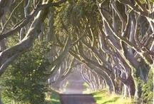 Irish Daydreams