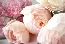 {flowers} / by Jacqueline Binsfeld