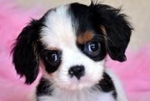 I love cute...