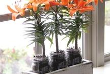 Gardening Ideas / by Elizabeth Bledsoe