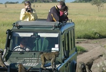 Reports from the Bush / by Africa Dream Safaris
