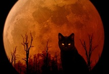 Over the Moon  / Full Moon after the Harvest Moon is a Sanguine Moon. / by Kristine .