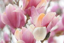 BEAUTIFUL FLOWERS / by Zinya