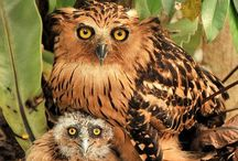 You're a Hoot! / Les hiboux et les chouettes / All things OWL!!!  Such cool and mystical creatures, don't you think?