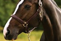 Bridles and Bits / Horse Bridles, Reins, and Halters!