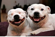 Happy Dogs Full of Joy / by A Place To Love Dogs