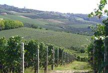 Piemonte landscapes / A taste of Piemonte / by Mariska Wijnands