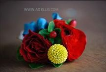 Boutonniere / Corsage Inspiration  / by Bella Rosa