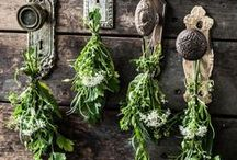 Herbs / How to grow, dry and use herbs from the garden