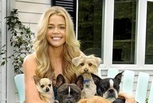 Celebrities and Pets / The famous and the infamous and their love of their doggys. / by A Place To Love Dogs