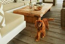 { Charlie The Cavalier- Cavalier King Charles Spaniels } / Pinned for you by Lisa @ http://charliethecavalier.com #CharlieTheCavalier http://50ThingsToKnow.com. #50TTK