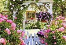 Gardens, Flowers & Yards / by Lisa Meyer