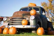Fall Fun & Festivities / My favorite time of year! / by Naomi Ferguson