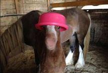 Horse Farming Ideas / by Holly Walcutt