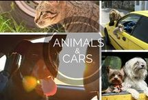 Animals and Cars / There's nothing better than a road trip with your favorite furry friend!