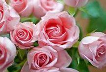♡ Fleurs ♡