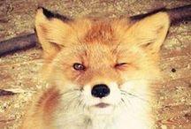 it's so fluffy! I'm gonna die! / it's so fluffy! I'm gonna die!! IT'S SO FLUFFY!!