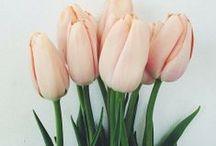 Blumen im Garten, so zwanzig Arten..