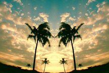 ♭ℯautíƒul ... palms / by Kelli Minton-Baker