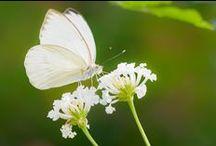 KleinCostaRica / Tropische Vlindertuin in Someren