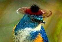 Birds in Hats / Birdss in Hats ...Fashion Collection 2016